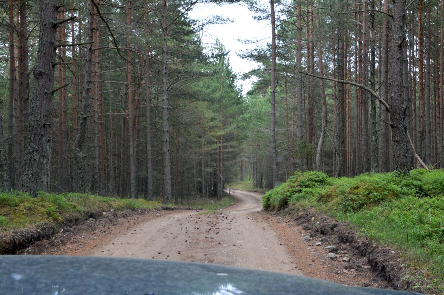 Wald, Wald und noch mehr Wald...
