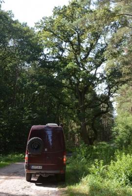 Kopfsteinpflaster Richtung Gutshof