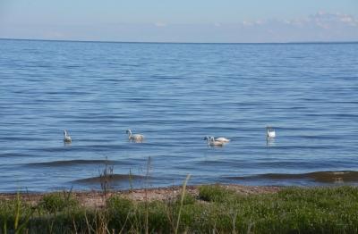 das salzarme, seichte Wasser lockt viele Vögel an