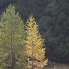 Der Herbst zieht ins Tal...