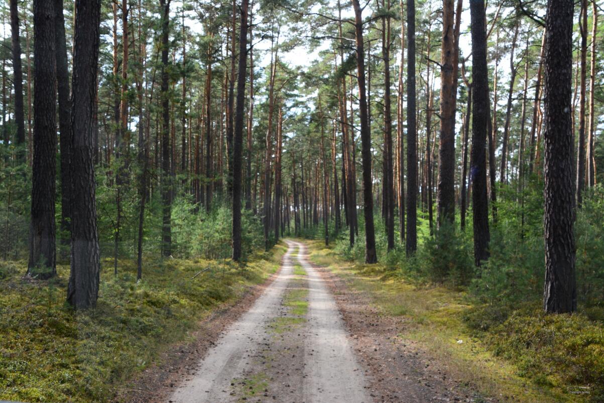 ... wie im Baltikum ...