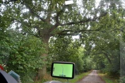 Knorrige Baumriesen am Wegesrand