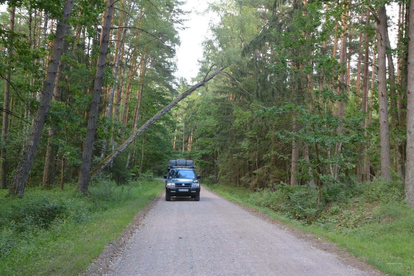 Noch einmal durch weite Wälder