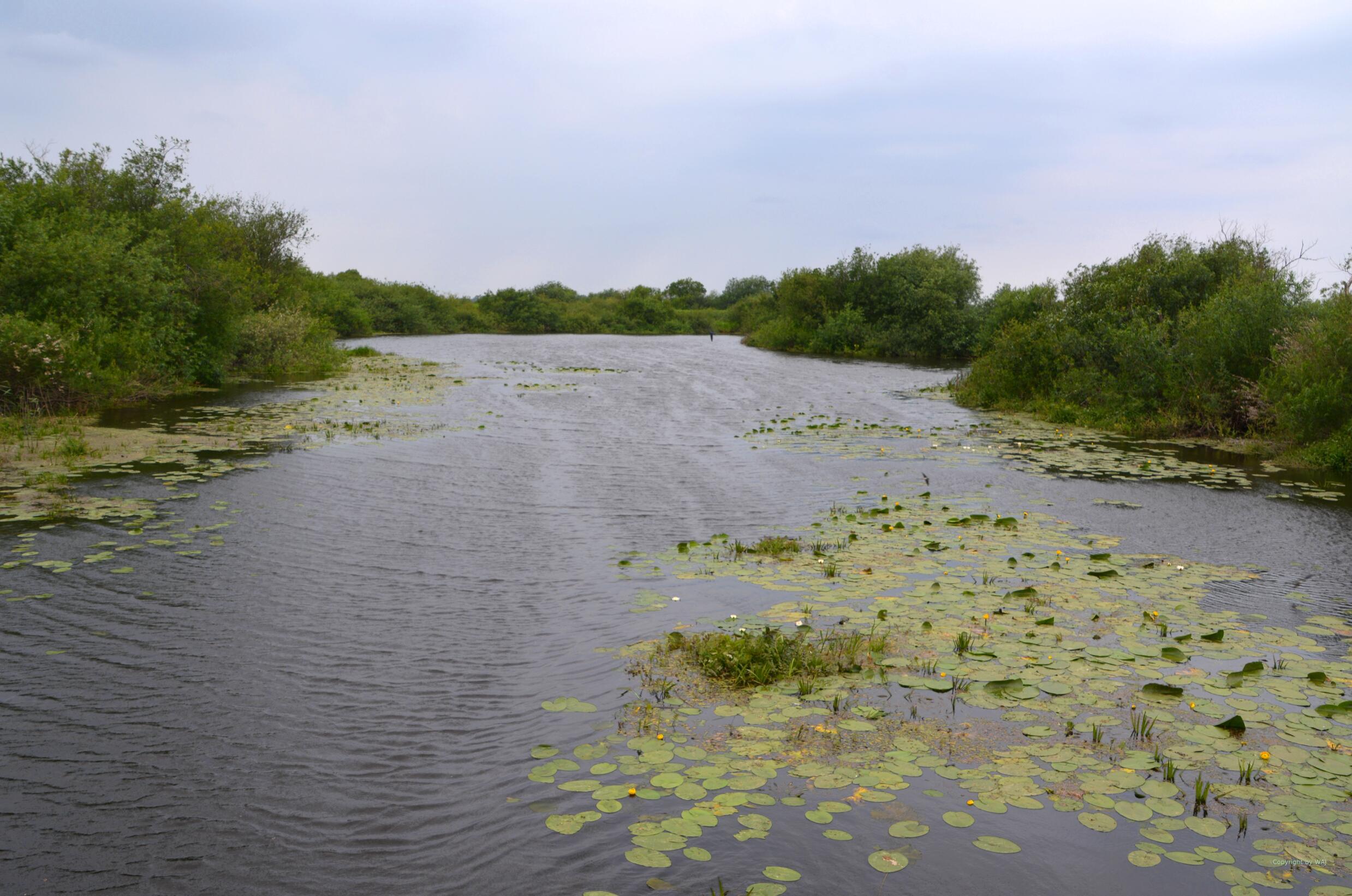 Malerische Wasserwege durchziehen das Sumpfgebiet.