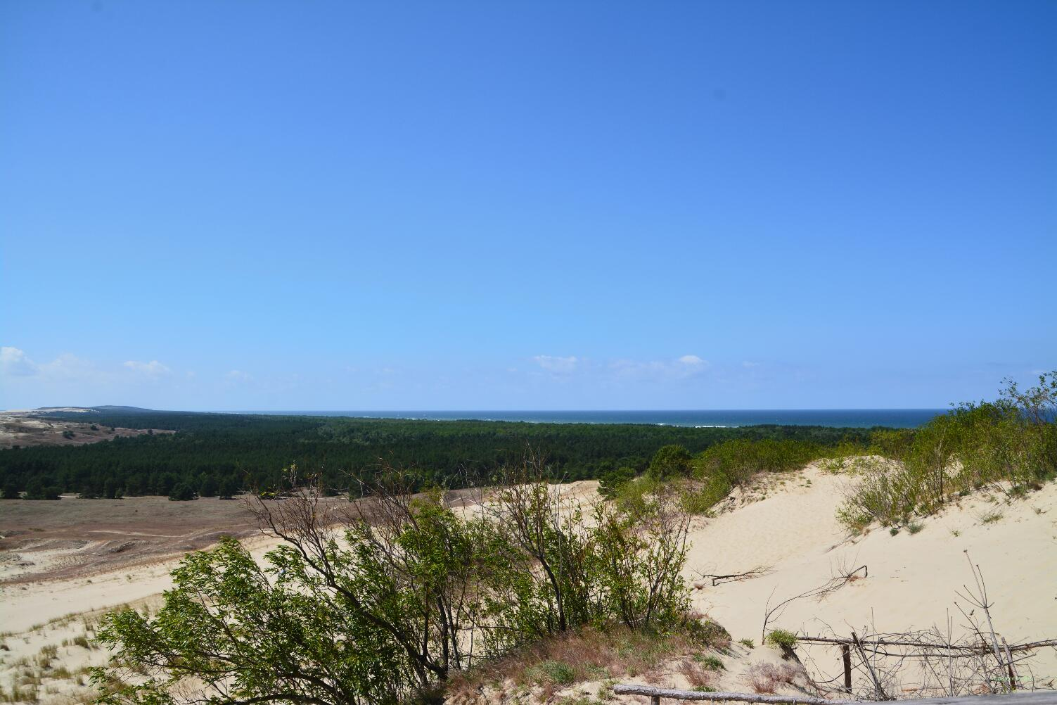 Wald hält den Flugsand der Küstendünen zurück.