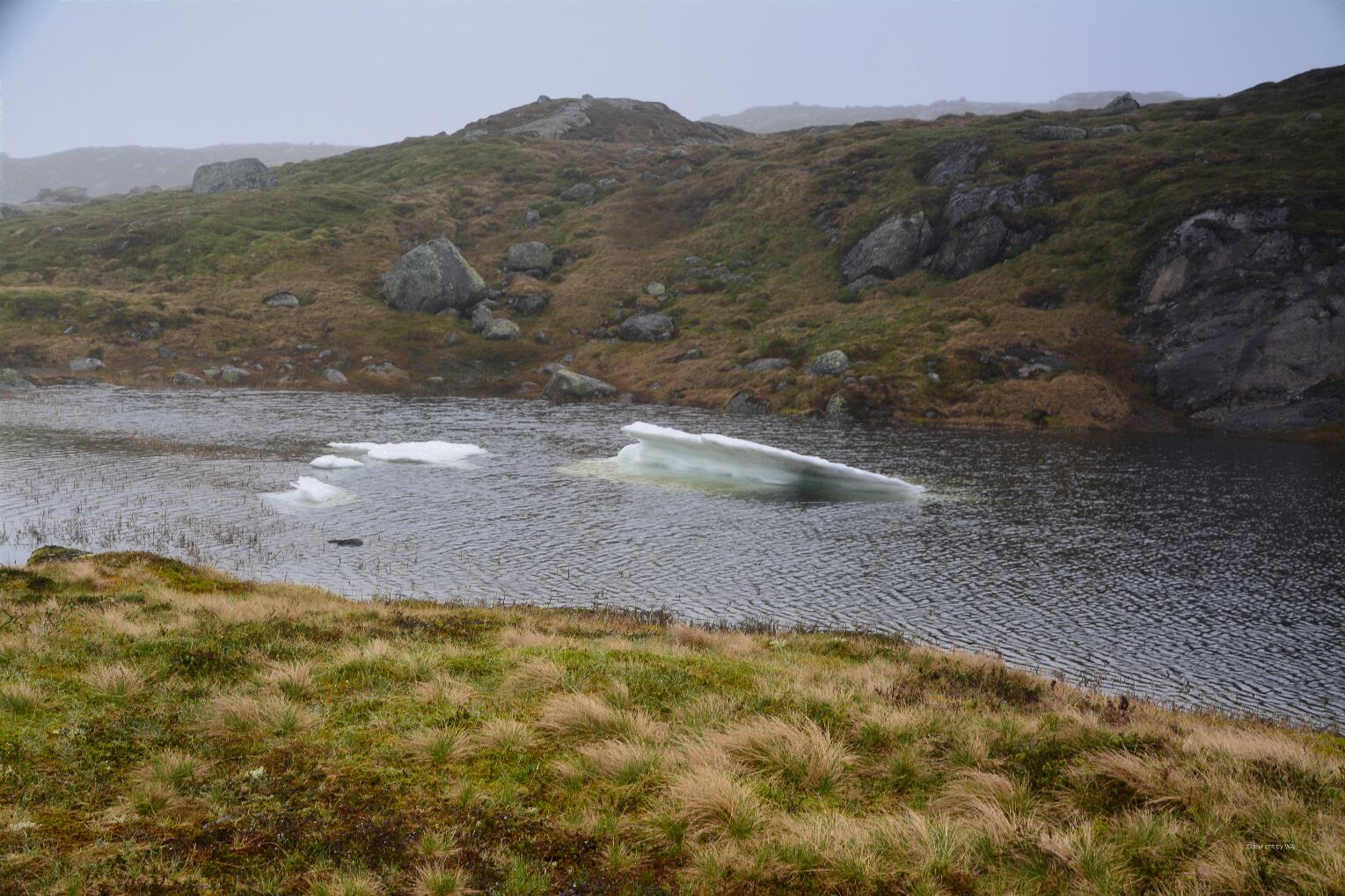 Minieisberge treiben auf ruhigem Wasser.