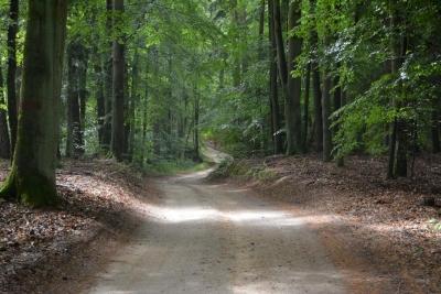 ... und Wald.