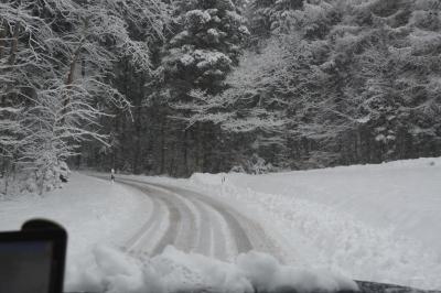 Ab in den verschneiten Winterwald!