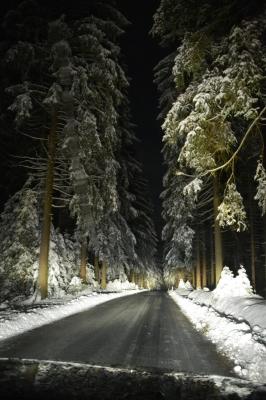 Zurück durch den winterlichen Hochwald