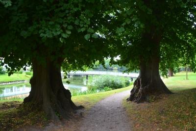 Uralte Bäume im Park